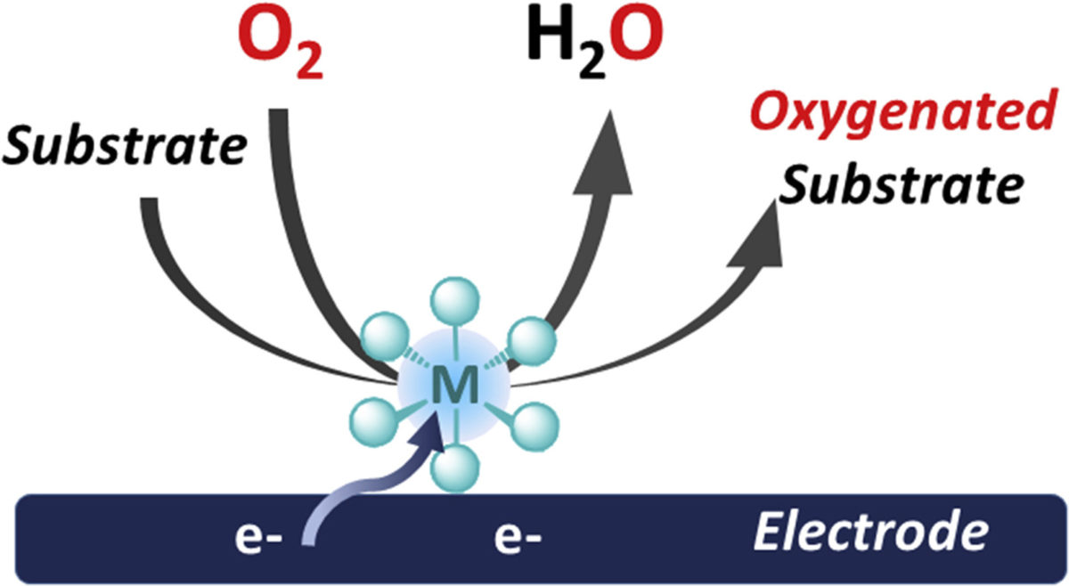 Bioinspired Molecular Catalysts for Homogenous Electrochemical Activation of Dioxygen