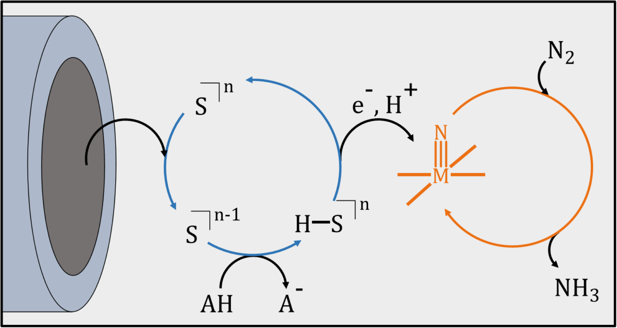 Advances in Molecular Electrochemical Activation of Dinitrogen